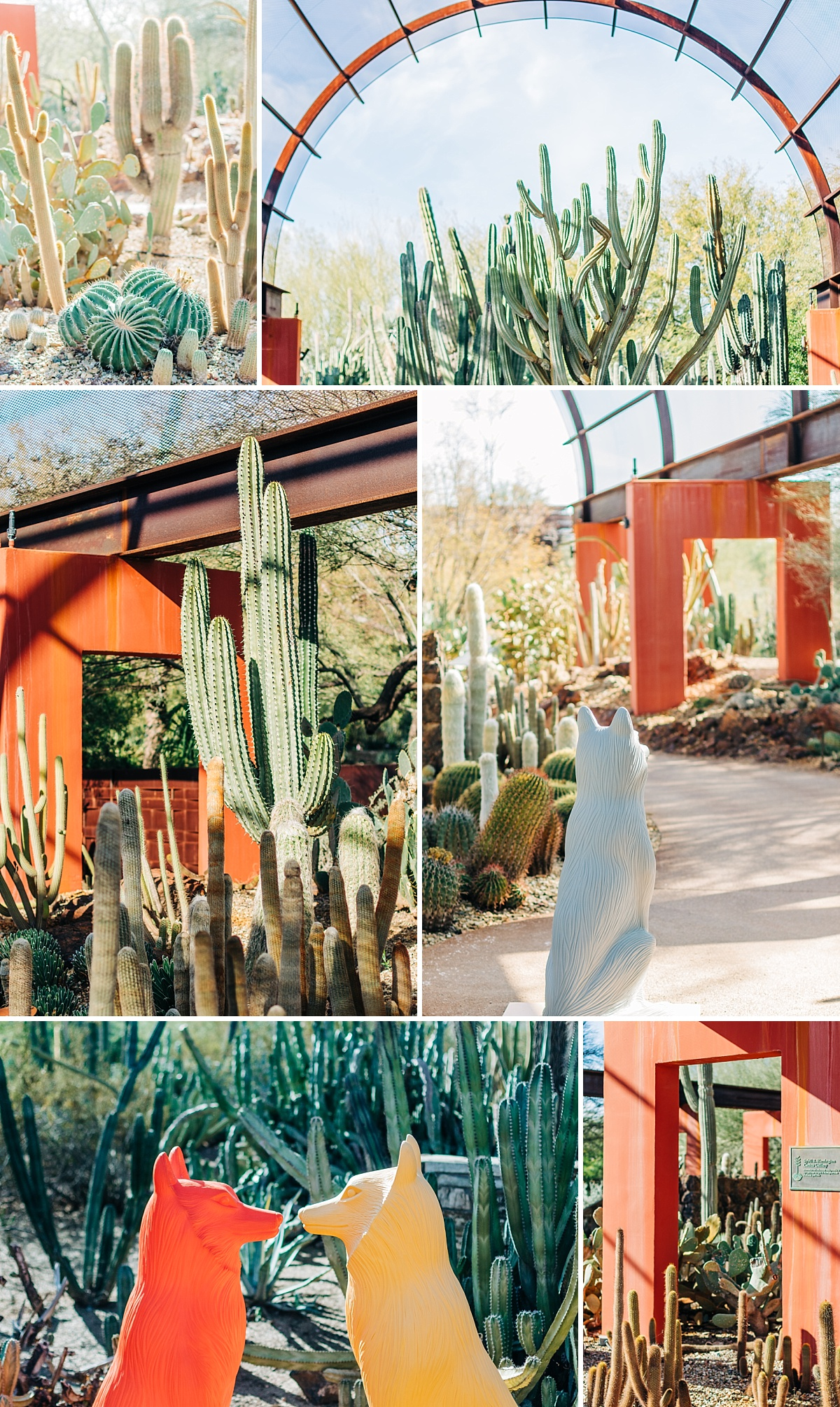 Desert Botanical Garden Community Day | Arizona Photographer