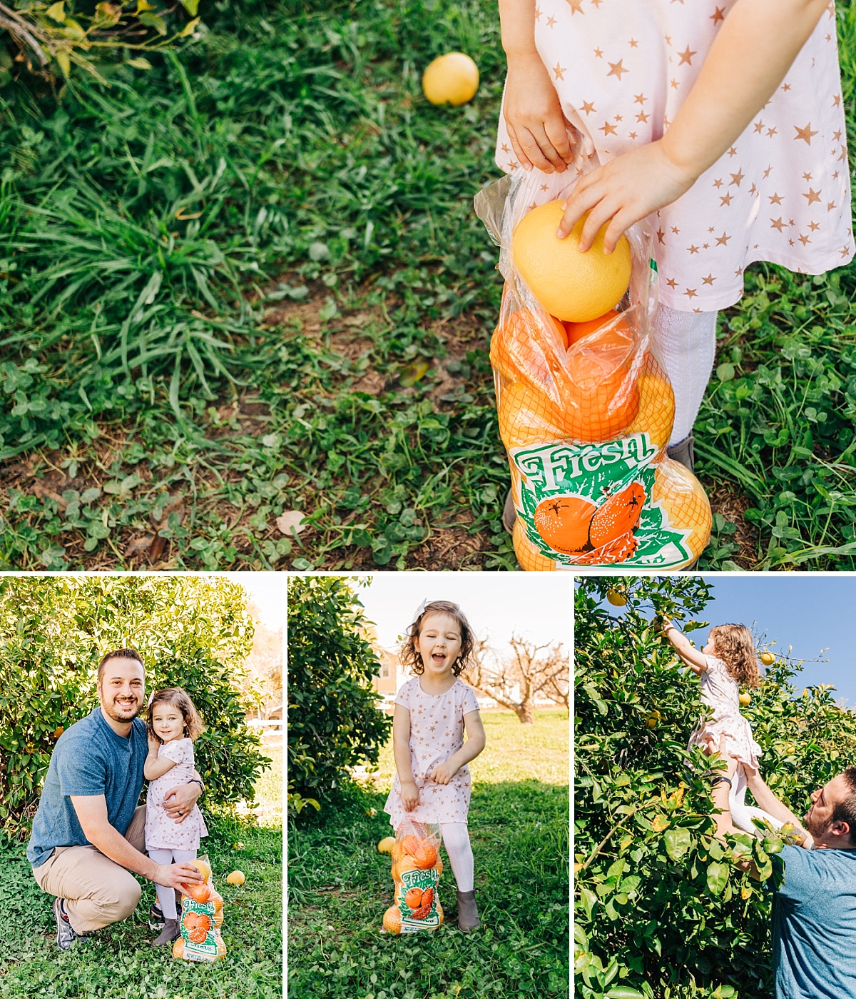 Fun Things to do with Kids in the East Valley | Pick Your Own Citrus at The Farm at Agritopia