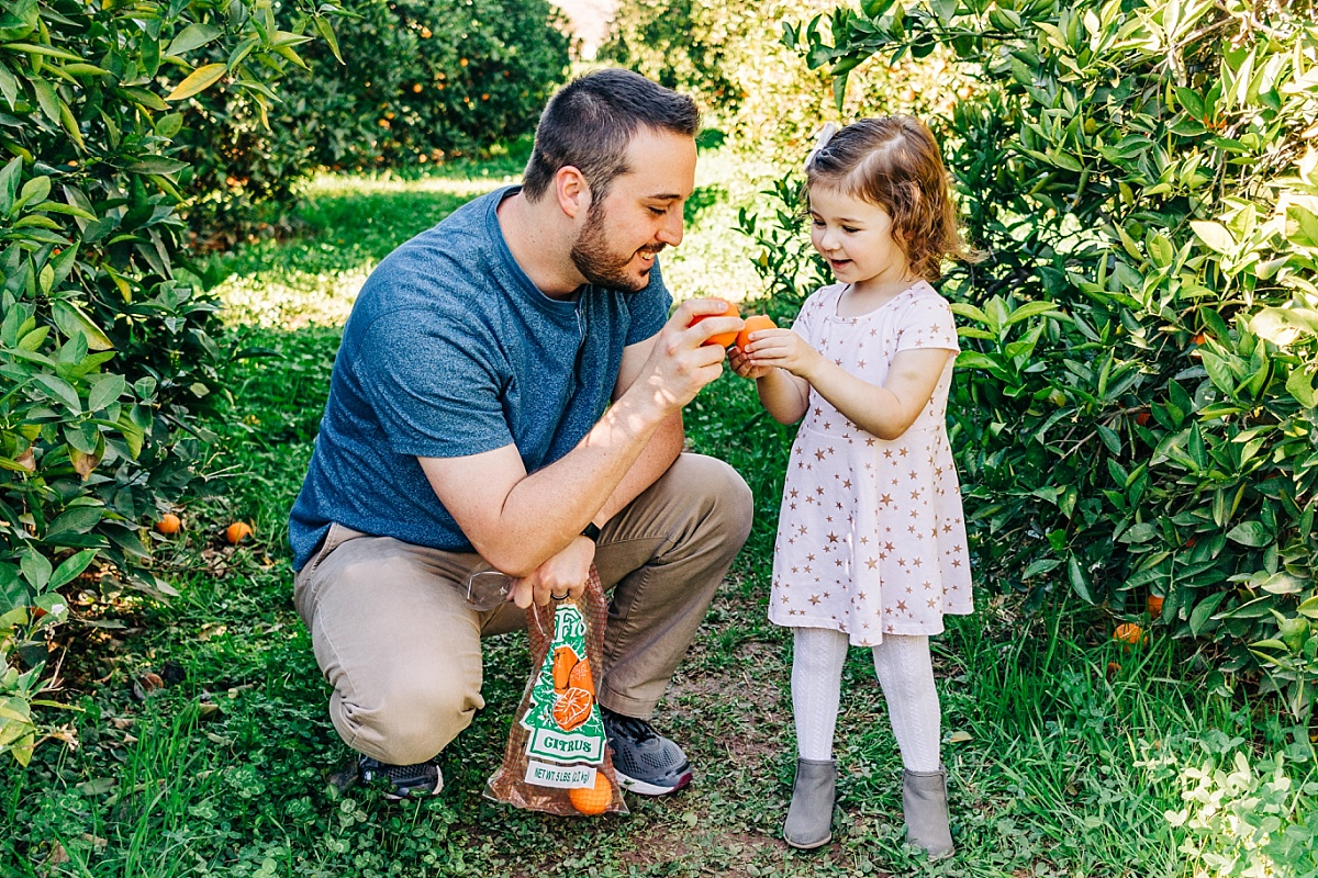Fun Things to do with Kids in the East Valley   Pick Your Own Citrus at The Farm at Agritopia