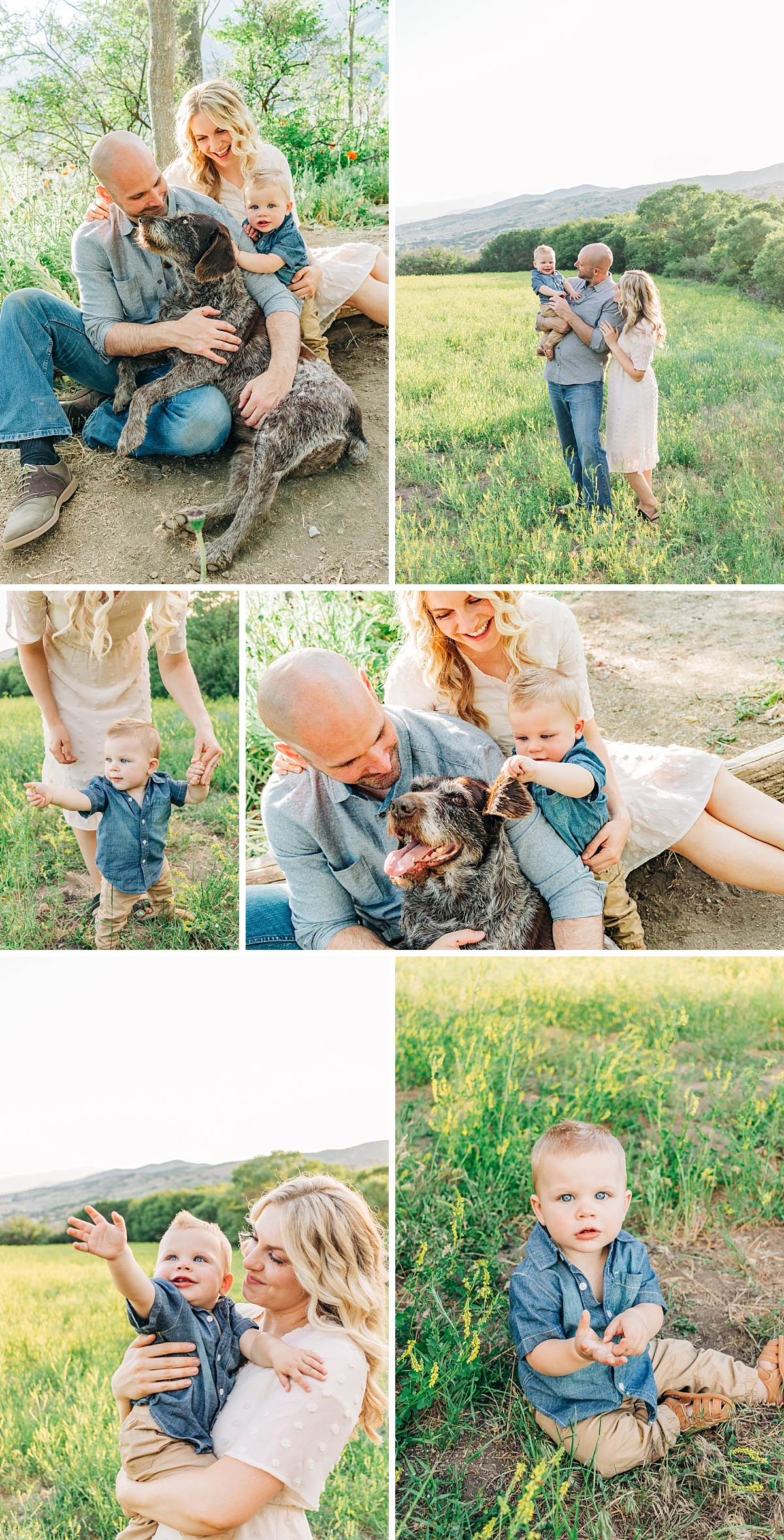 Family Photos in a Field of Wildflowers