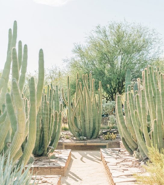 Desert Botanical Garden Community Day | Arizona Photographer